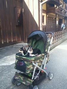 高山カート犬