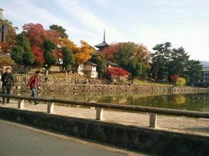 紅葉IN奈良